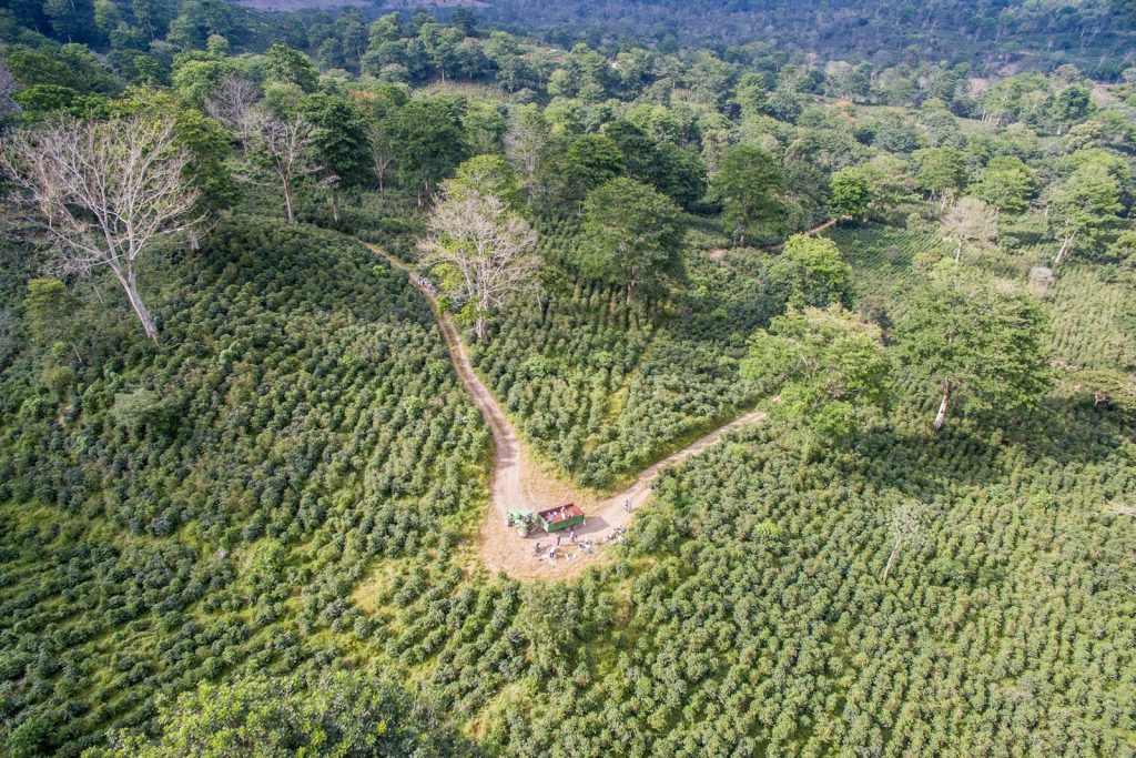 Find out how coffee can speed up forest restoration