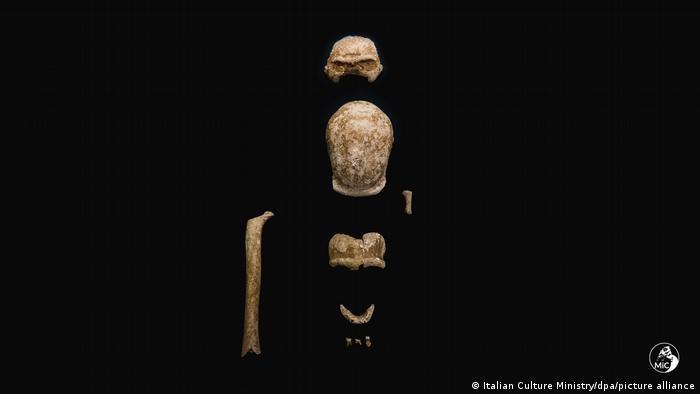 Fossilized Neanderthal bones