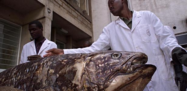 Prehistoric fish have been found on the island