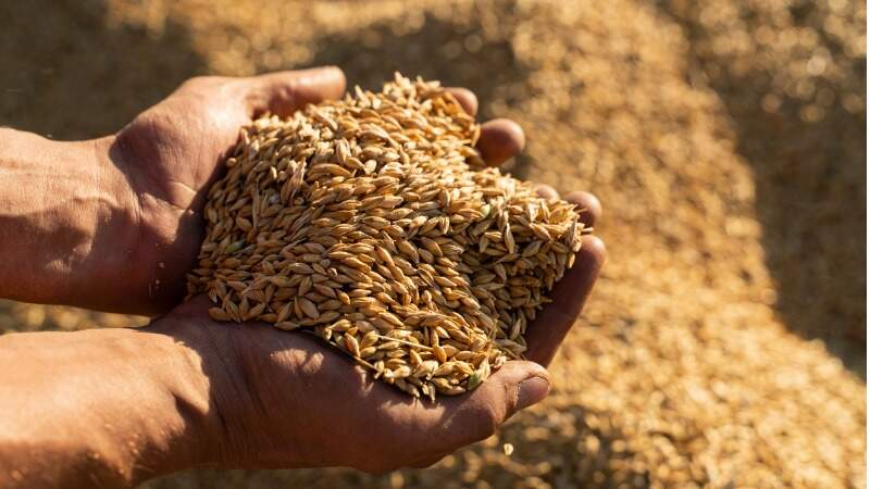 5 health benefits of barley that will surprise you