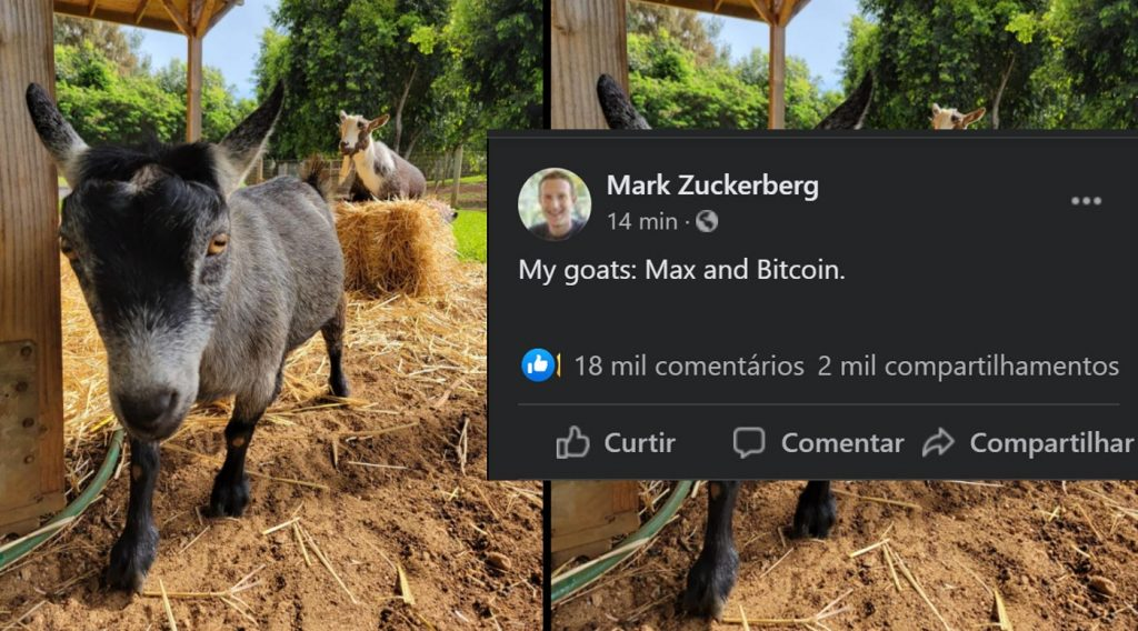 Mark Zuckerberg says he has a goat called Bitcoin and posts a picture on Facebook