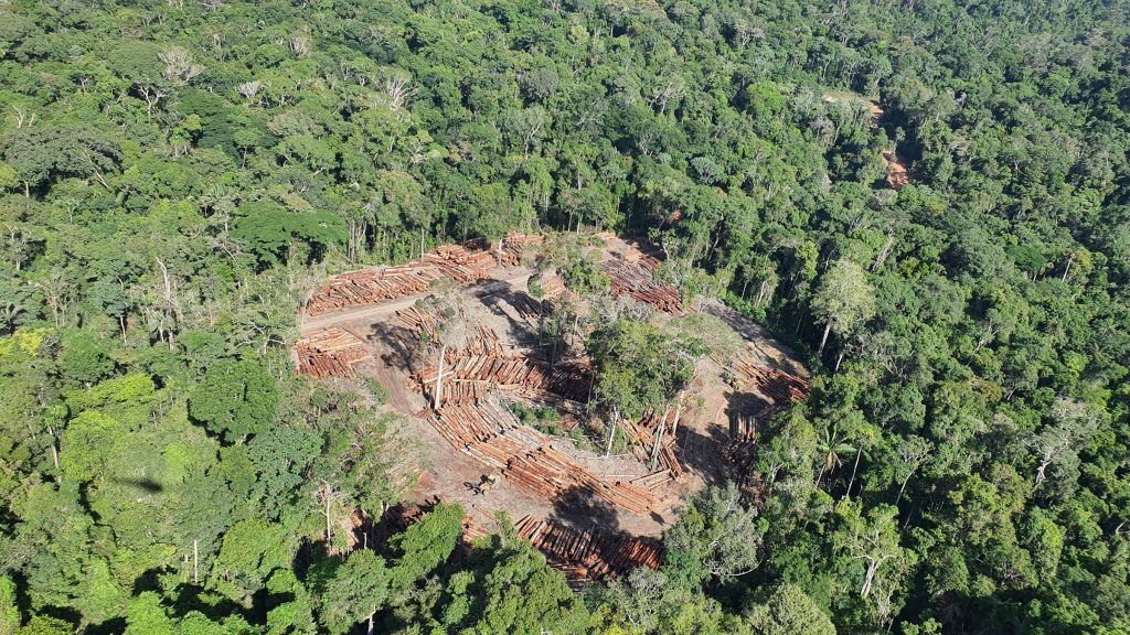 The wood company suspected of an illegal export has made links with European authorities from inside IBAMA, notes PF - 05/26/2021 - Environment