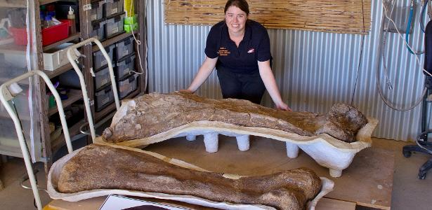 A new species of dinosaur has been found, and it is one of the largest species of dinosaur in the world