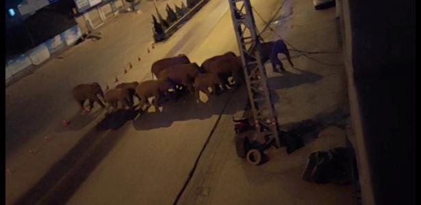 Elephants leave the reserve, travel 500 km and damage $1.1 million - 06/02/2021