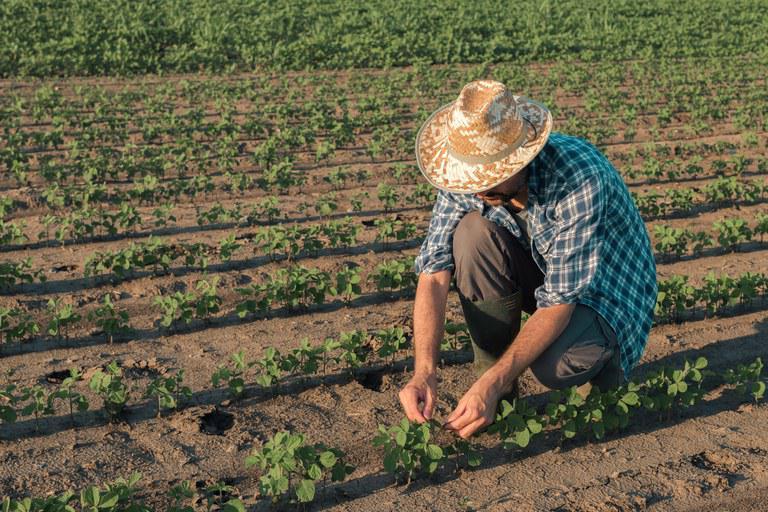 plano safra Agricultor agricultura familiar lavoura fazenda produtor recuperação judicial produtor pessoa física