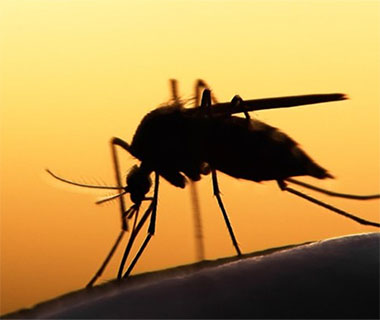 Side confirms three cases of malaria in Miguel Alves;  Patients have been isolated