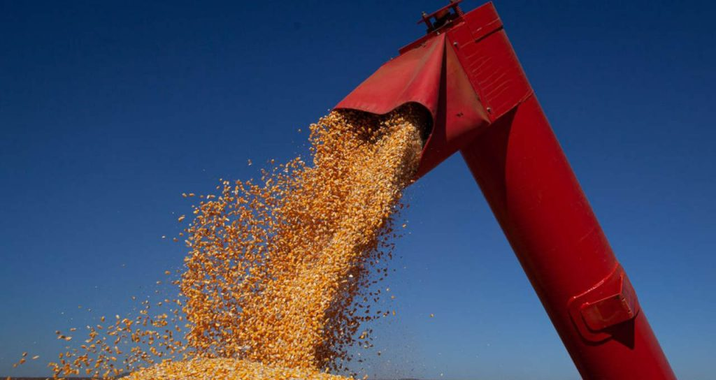 USDA - Money Times reports that US corn crop ratings rise to 64% between good and good