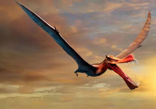 Ciência localiza fóssil de dragão considerado o maior réptil voador da Austrália