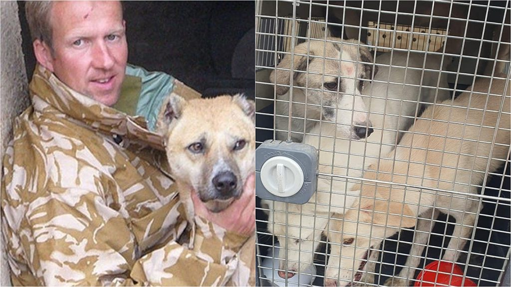 A former soldier arrives on a plane in the UK with dogs and cats taken from Afghanistan