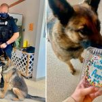A puppy is rescued from a stray animal shelter and becomes a police dog