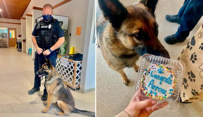 Cachorro cheirando fatia de bolo e em coleira com policial