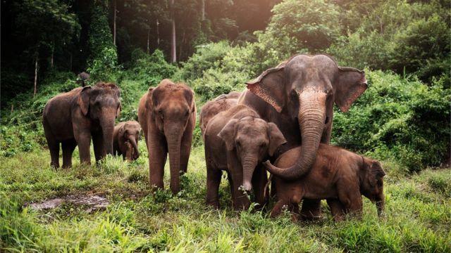 Six elephants in the jungle