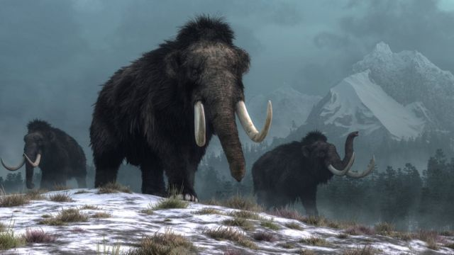Mammoths walking in the snow at night