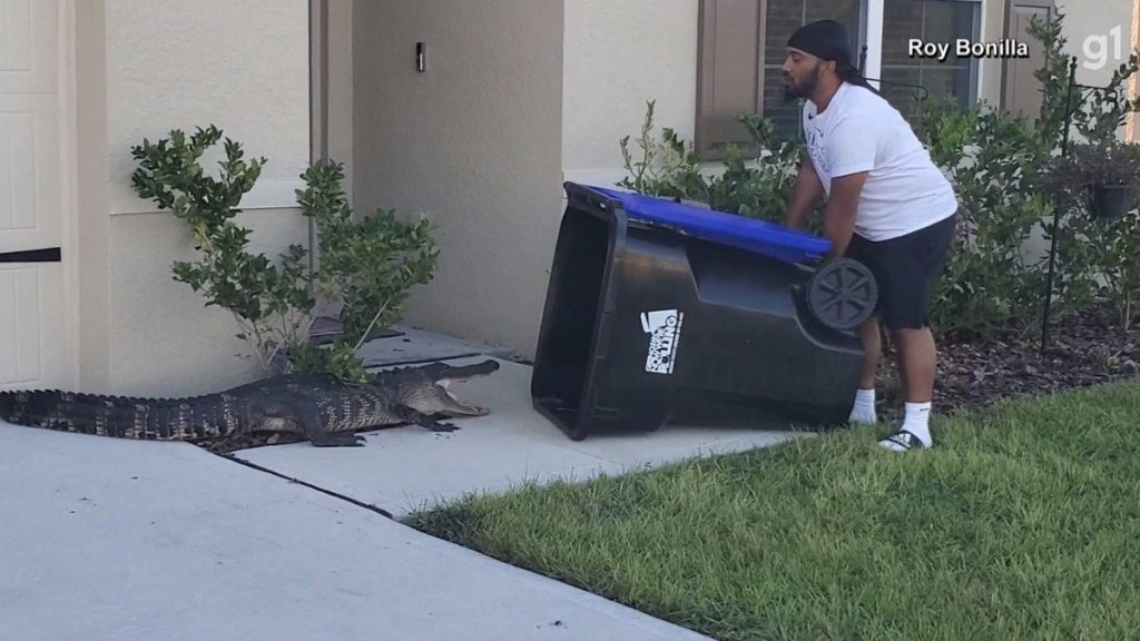 A man uses a trash can to catch an alligator on the doorstep of his Florida home;  watch    Globalism