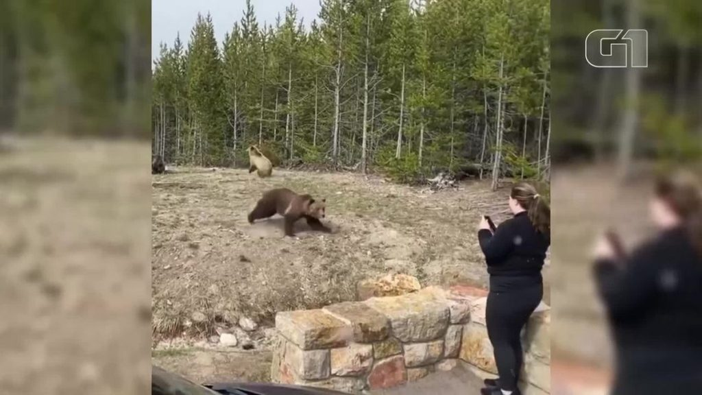 A woman was sentenced to prison after registering with bears in a US park;  Watch the video |  Globalism