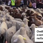 Sheep invade the center of the Spanish capital.  Watch the video |  Globalism