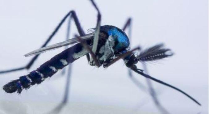 Febre amarela é causada pela picada do mosquito Aedes aegypti